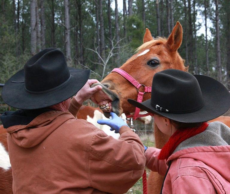 Horse Maintenance Day
